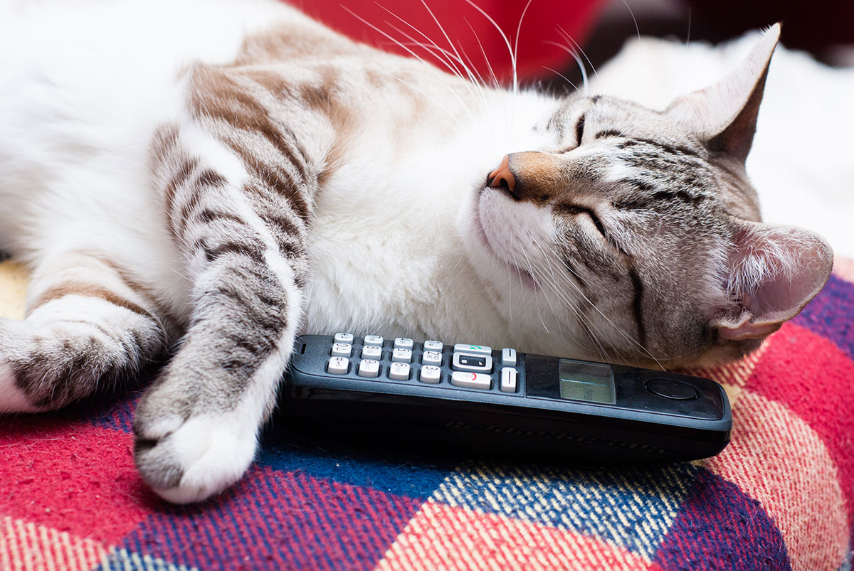 Cute cat playing with telephone. Scheudling The Pet Taxi App on his own. Pet Taxi App offers Pet Transportation and Delivery Service for Groomers, Dog Daycares, Veterinarians, and Busy Pet Owners.